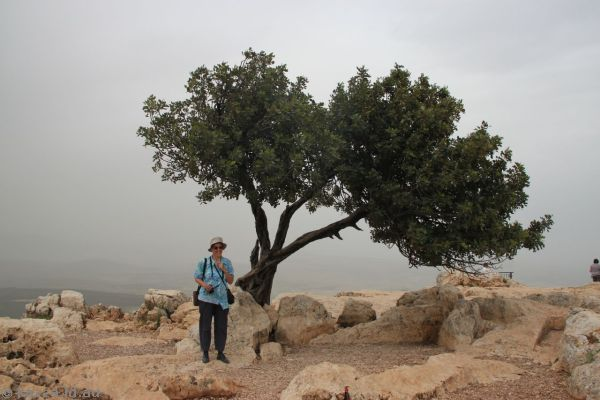 Mum and tree on top of Mount Arbel