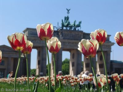Poppies at the Brandenburg Gate
