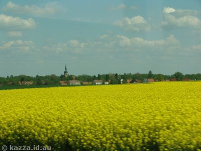 Fields of canola south of Berlin