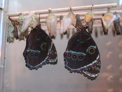Butterflies in the Schmetterlinghaus