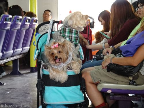 Locals carry dogs, not babies, around in strollers