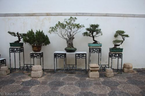 Bonsai in Kowloon Walled City Park