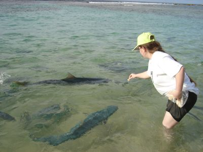 Feeding the fish at Ned's Beach - those Kingfish are enormous!