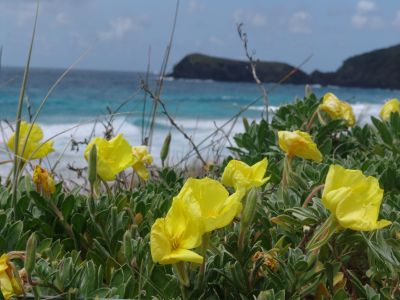 Flowers at Blinky Beach