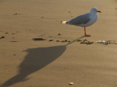 Seagull on Long Beach