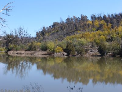 Reflections on the Murrumbidgee River
