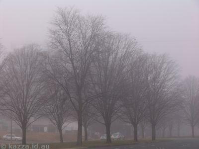 Canberra Fog