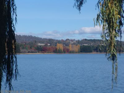 Canberra Autumn