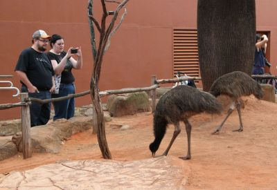 Stu, Kore and emus
