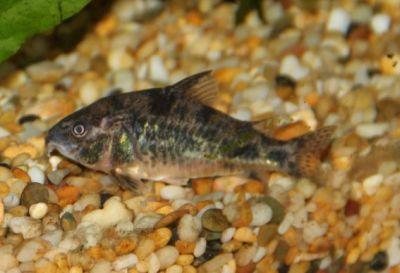 Neil's fish