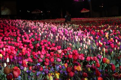 Floriade Nightfest 2011