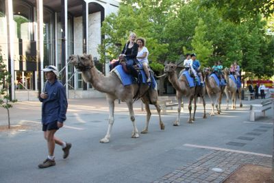 Camels in Garema Place