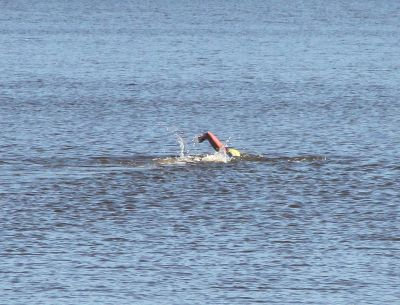 Swimmer on Lake Burley Griffin