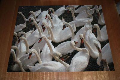 Swans jigsaw