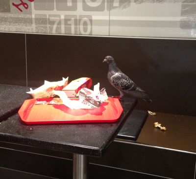 KFC Pigeon