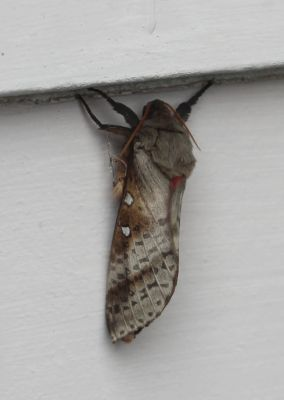 Moth at the coast