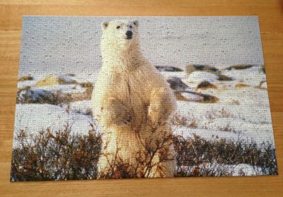 Polar bear jigsaw