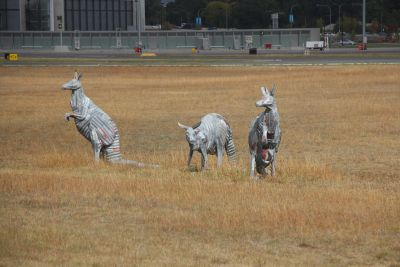 Kangaroo sculptures