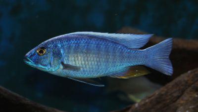 Alby's fish tank