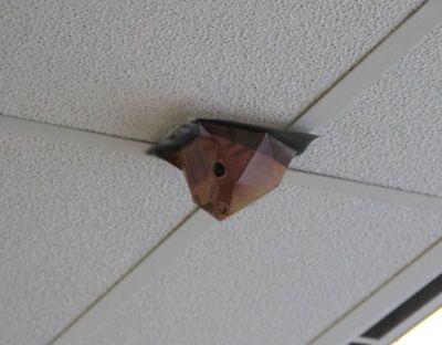 Ceiling cat 2010