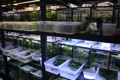 Serkan's fish room