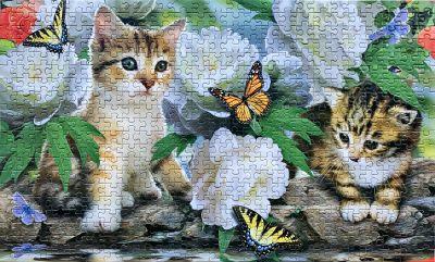 Kitten jigsaw