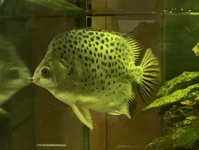 Laser Zone fish