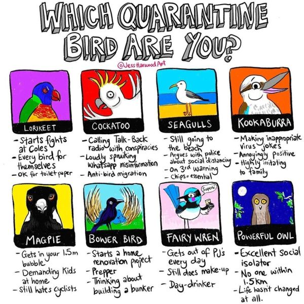 Which Quarantine Bird are You?