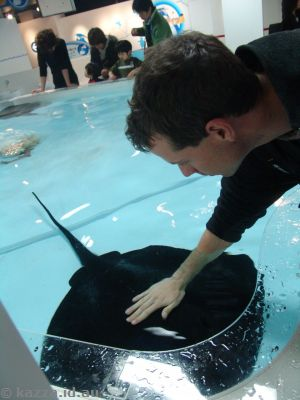 Andrew patting a sting ray
