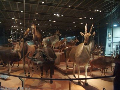 Animal display in the museum