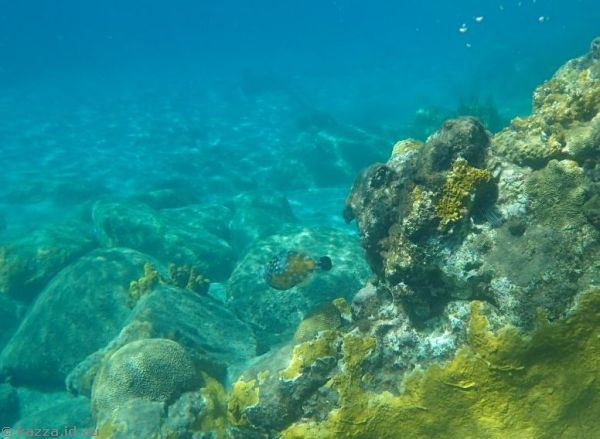 Deeper water and fish that we saw when the paddleboarder took us around
