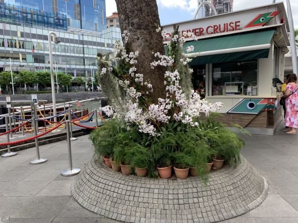 Orchids at Clarke Quay