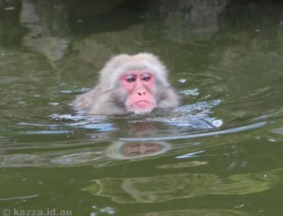 Cooling off in the pool