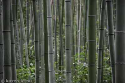 Sagano bamboo forest
