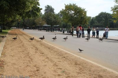 Geese on the march!