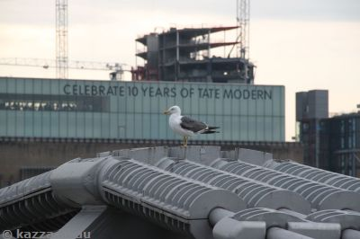 Seagull on the Millennium Bridge