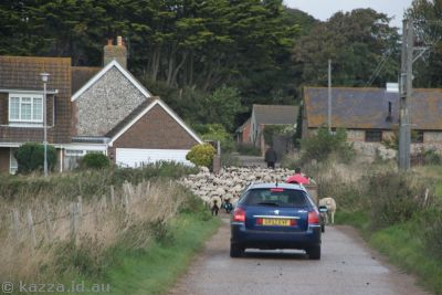 Getting stuck behind flocks of sheep is a minor hazard travelling in England
