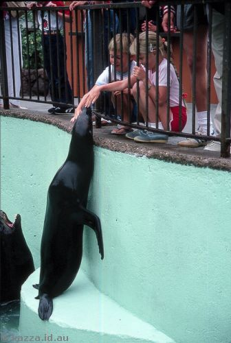 Patting a sea lion