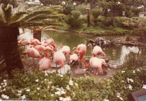 Flamingos at Sea World San Diego