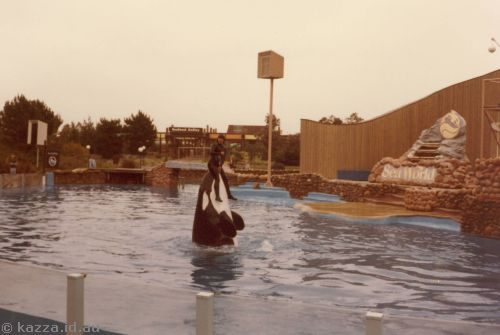 Shamu giving the trainer a ride