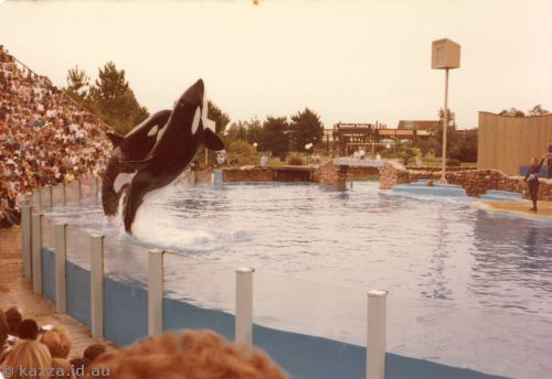 Shamu and Candu jumping